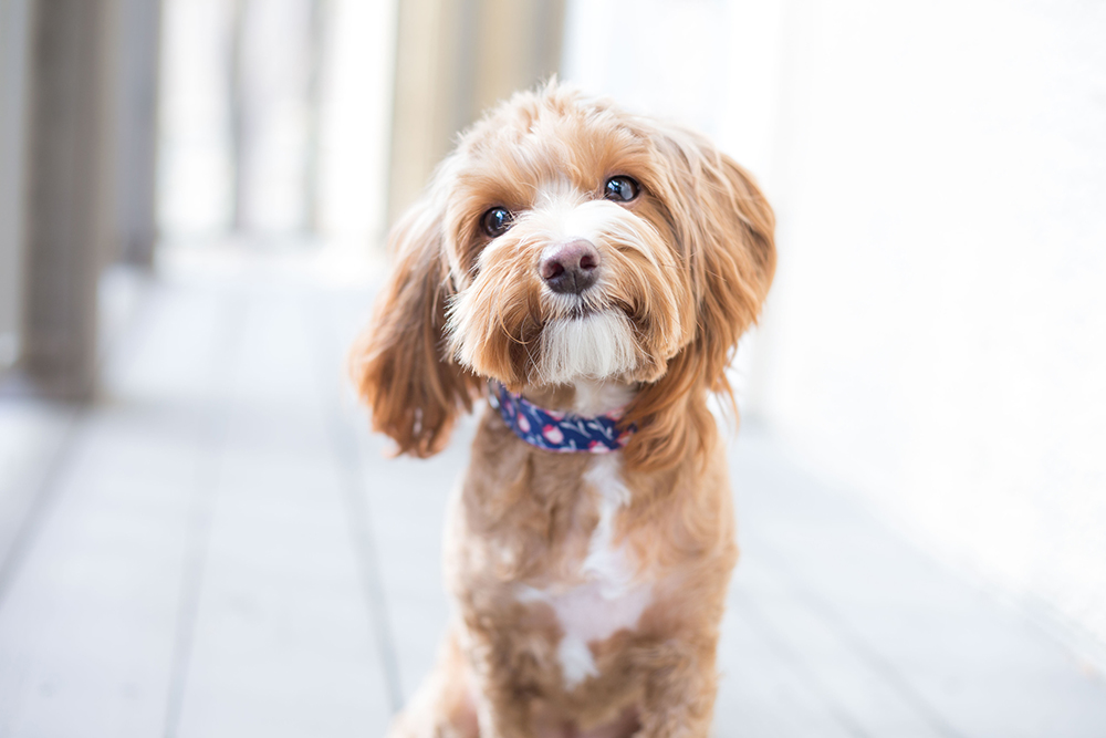 Effective Tips for Puppy Proofing Your Apartment | Barrington Residential
